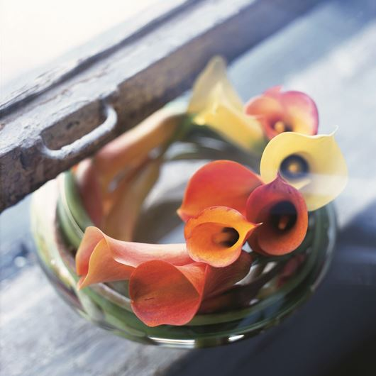 Bowl of callas. Photo: Stephen Smith for Florists Review