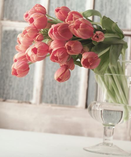 Modern glass urn with French tulips. Photo: Stephen Smith for Florists' Review