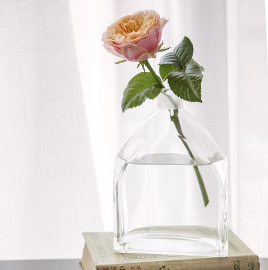 David Austin's 'Edith' rose in a decanter vase. Photo: Rolinda Windhorst