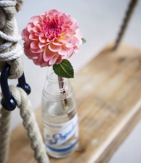 Dahlia in a pop bottle. Photo: Rolinda Windhorst