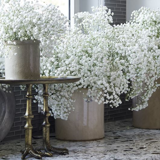 An airy kitchen spread featuring 'Overtime' Gypsophila.