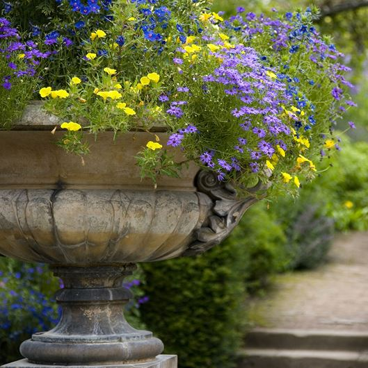 Garden planting with in a classic in kylix-shaped urn. Photo: Shutterstock