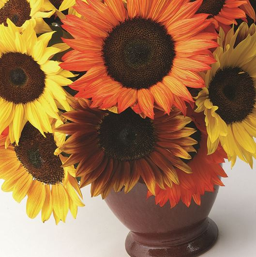 Color enhanced sunflowers. Photo: Stephen Smith for Florists' Review