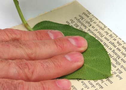 Press the glue-covered side onto salvaged book pages